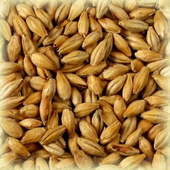 Munich Light Malt (13-17 EBC) 1KG kr 23, 25KG kr 460 - Castle